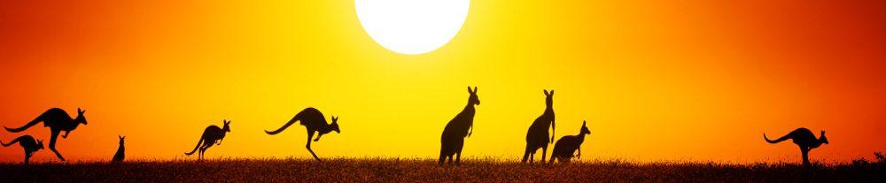 Vasayo Australia